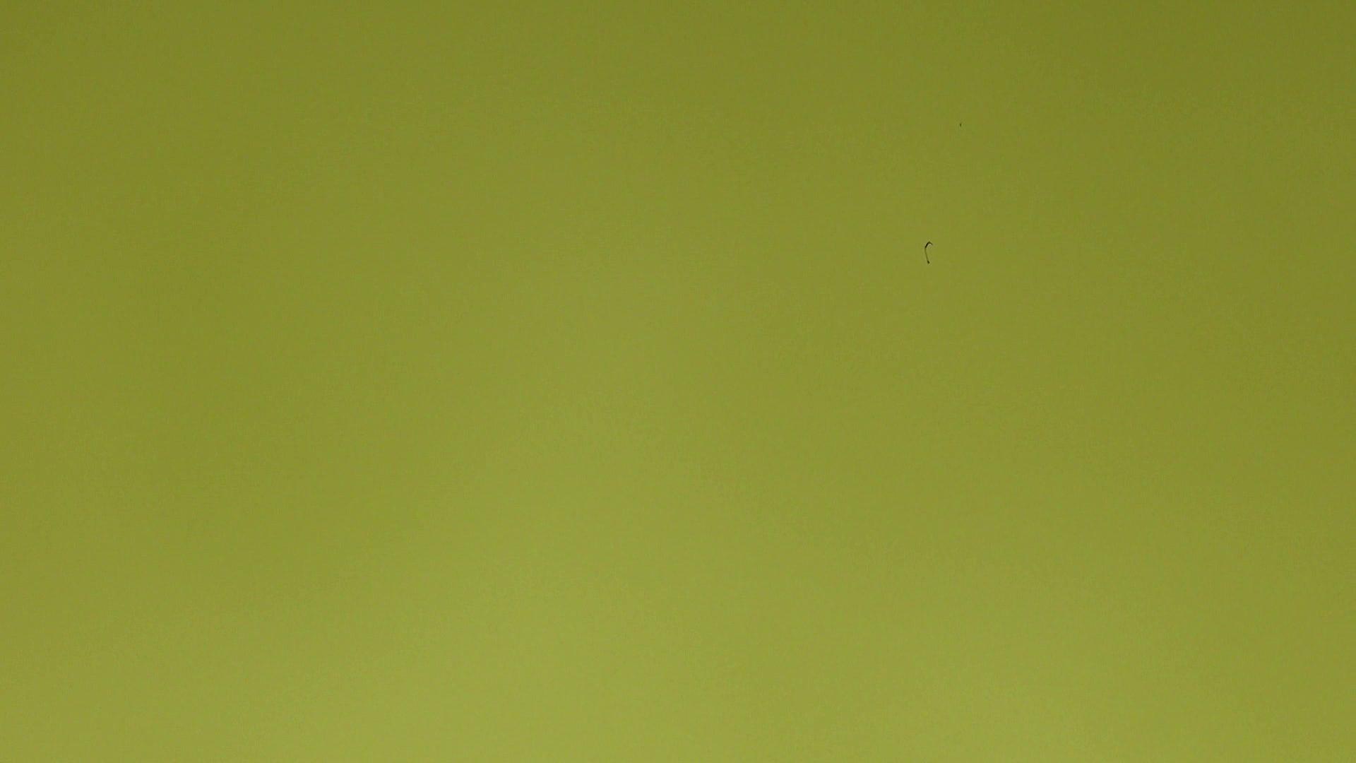 上級者の方専用 vol.03 盗撮シリーズ | おまんこ見放題  102PIX 39